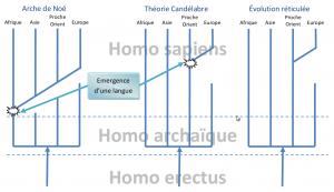 Schéma des 3 scénarios de l'apparition de l'homme moderne Repris et adapté du site Hominides.com